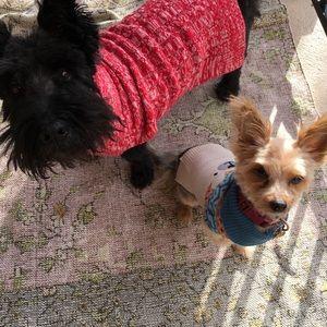 Accessories - Meet the Boutique Pups ❤️